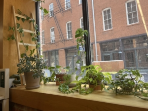 Plants on the windowsill next to a desk in the Alliance Center building